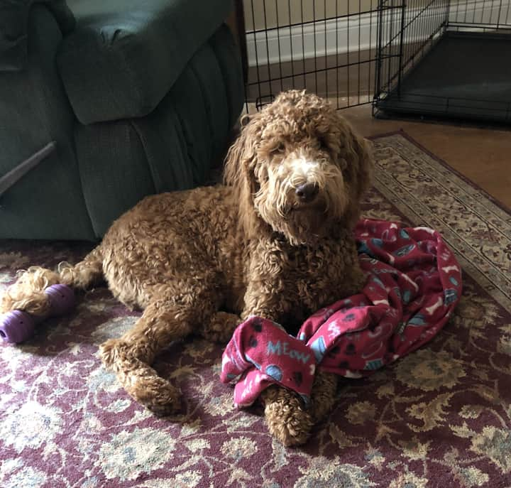 Cute dog with toys