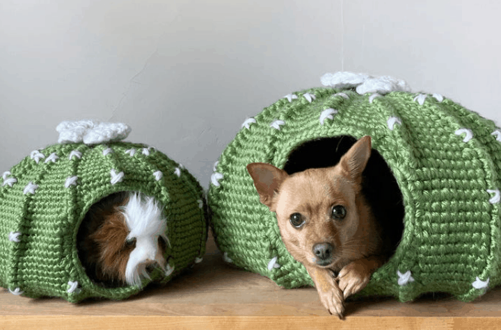 two crochet cactus dog beds